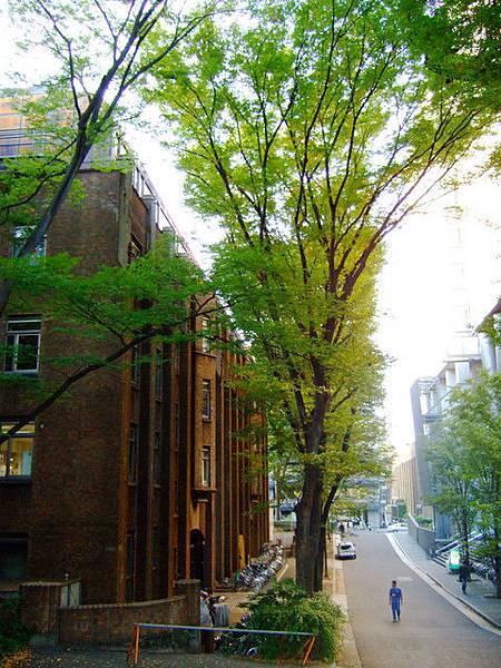 翠綠高挺的大樹