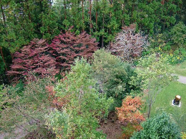 塔頂往下眺望的風景,很多樹木都變色囉,左上角的紫紅色好美。
