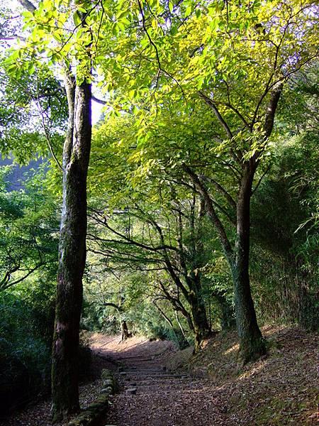 關所旁邊的林間古道