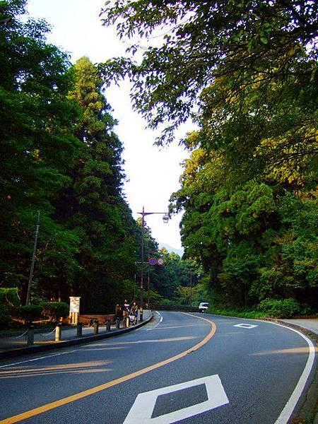 在停車場受到老人指引,接下來將沿著右邊的杉木林蔭道前進