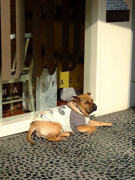 狗狗也是很跟得上流行的,看他穿米奇T就知道