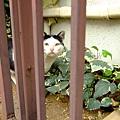 哈囉~你在看我嗎? 喵~