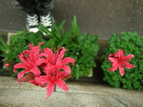 淋雨過後的花朵有一種新生的清新美
