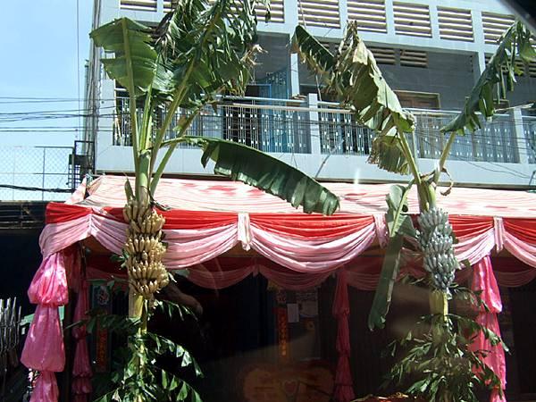 金銀香蕉。拖哥說這是柬國傳統,家有婚宴時一定要裝飾在門口