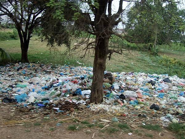 市集對面的樹好可憐,被誇張的垃圾給埋了!