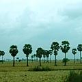 樹一棵棵分散在一望無際的草原上,隨著巴士前進頗有超現實的感覺