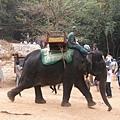 因為要走一段山路,也可以選擇花usd15坐大象上山