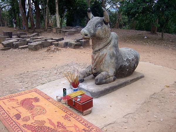 Phnom Bakheng下方的神牛