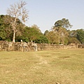 遠望Terrace of Elephants