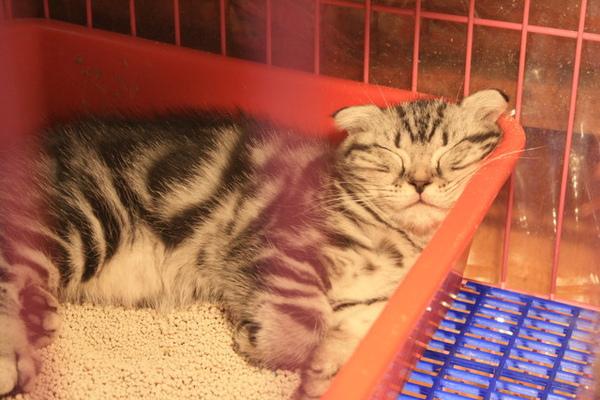 同在一個籠子裡,旁邊這位卻依然睡得不省人事~真可愛~