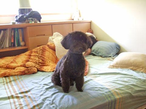 9/28 早上他差不多就是這個狀態,坐在我弟床上送我們出門