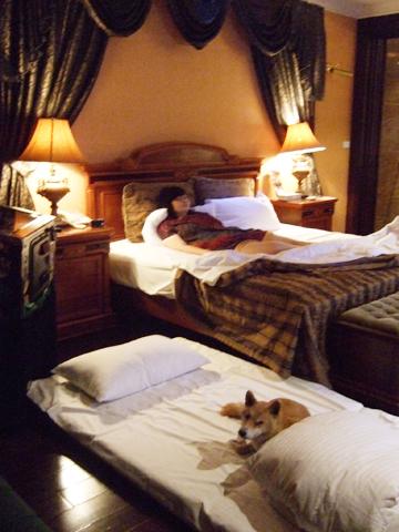 回賭國風雲,一人一狗庸懶地各佔一床的景象映入眼簾
