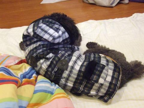 12/14 在夜市買了一件可愛的衣服給蛙蛙,結果他超不爽的!