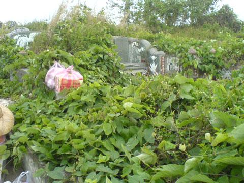 3/14 又到掃墓季節~奶奶的墓被草淹沒幾乎快看不到了!