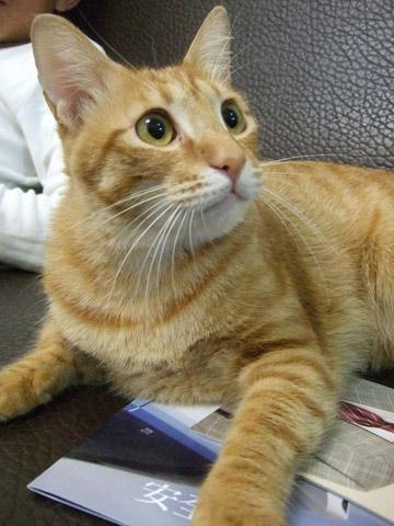 比爾養了六隻貓只有二隻公的不怕生,這隻小名bubu,很可愛!