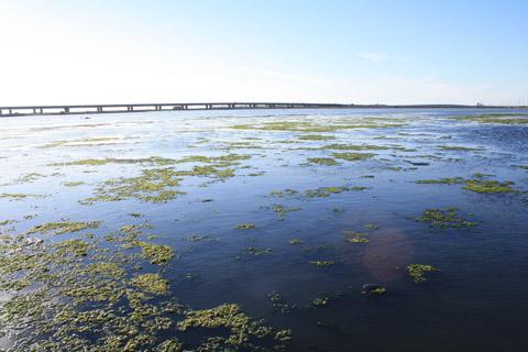 回程路過一大片不知是沼田還是海口河,總之很美~很壯觀~