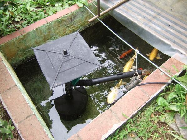 第二回踏入葉宅,頭一次來到庭院才發現有魚池還有一群鯉魚