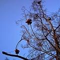 仔細靠近一看 樹枝被打上了好多可愛的蝴蝶結