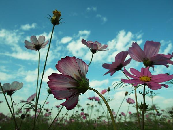 真的很像在花的國度中一群花精靈在飛舞著