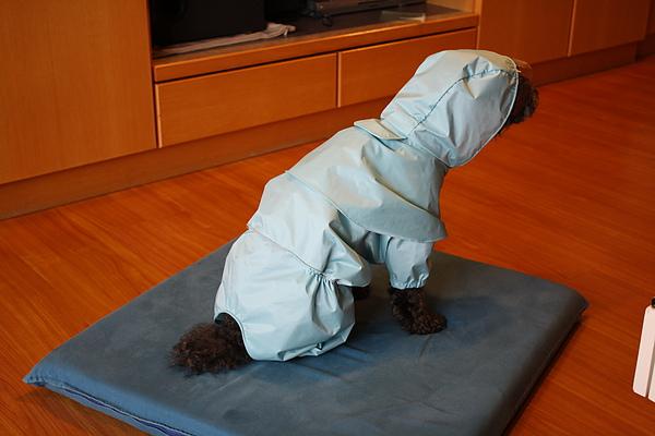 6/14 夏天到了雨季也來了, 買一件雨衣給蛙少爺雨中散步用