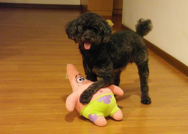 回家看到蠢蛙和他的好朋友-派大星在玩耍中