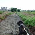 最近每天散步都會走的水泥小徑