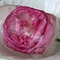 順便把快凋的玫瑰拿來做冰塊~超美的!