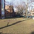 圖書館外的鴿子