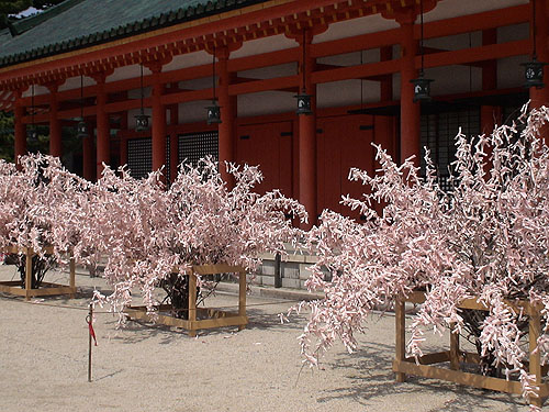 平安神宮裡很像開滿櫻花的籤詩