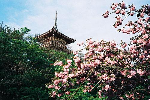 四月底去還有櫻花唷~