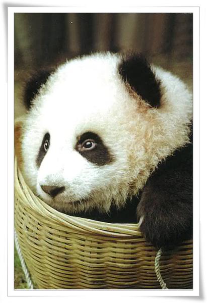 熊貓2.jpg