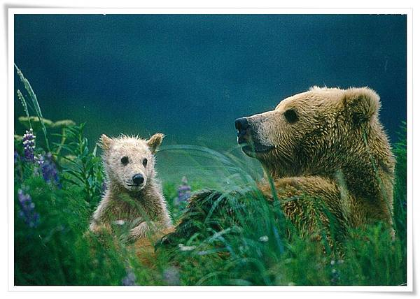 Brown Bear cub at mother's side.jpg