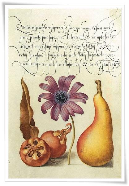 pear.jpg