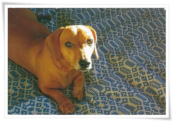 brasil dog.jpg