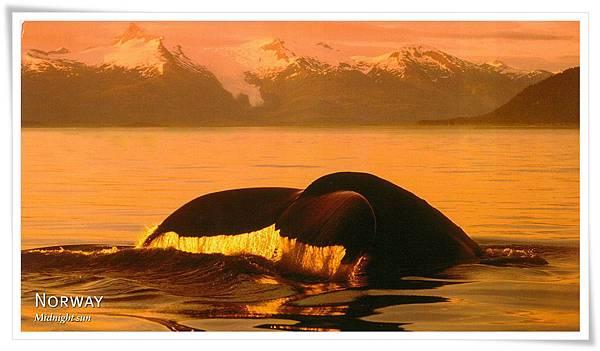 挪威 Humpback whale.jpg