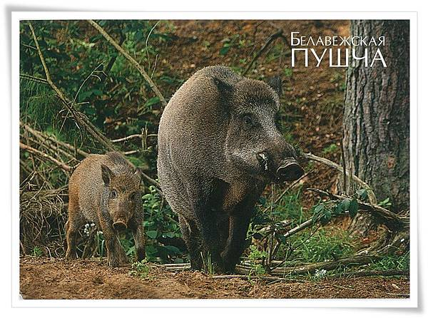 wild animals .jpg