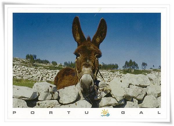 葡萄牙 驢子.jpg