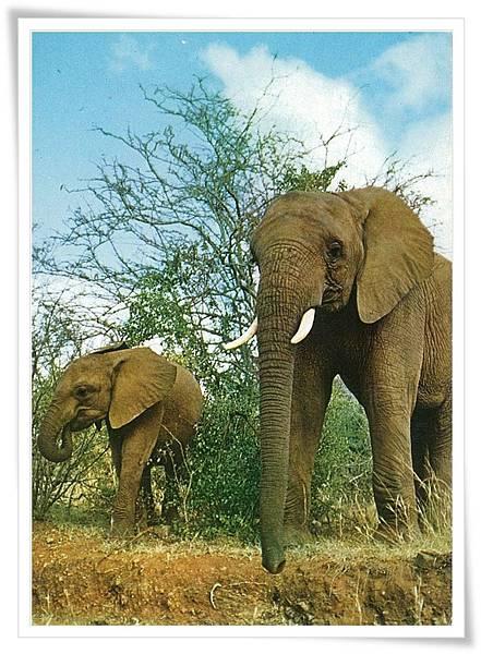 荷蘭 象.jpg