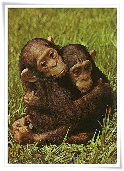 猴 擁抱.jpg