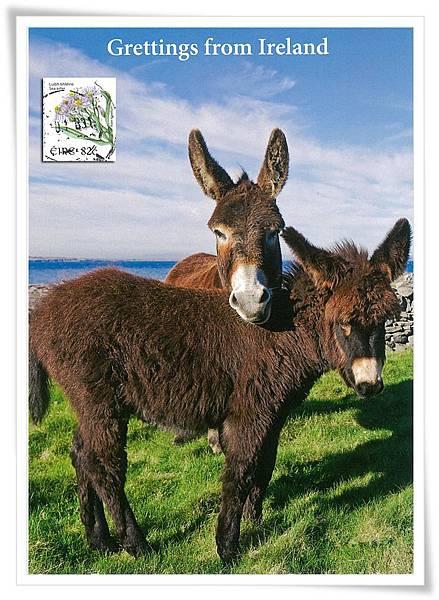 愛爾蘭 驢1.jpg