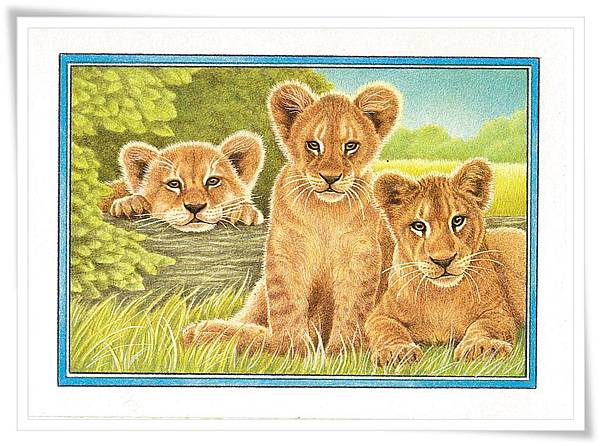 Lion baby.jpg
