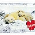 加拿大 北極熊