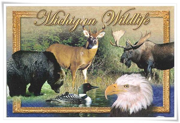 michigan wildlife
