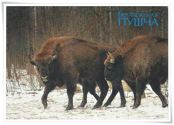 白俄羅斯 動物