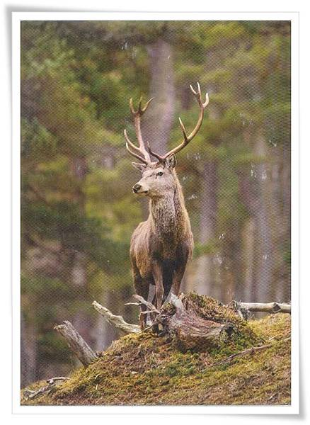 cn deer