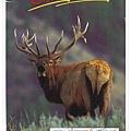 rocky mountain elk1
