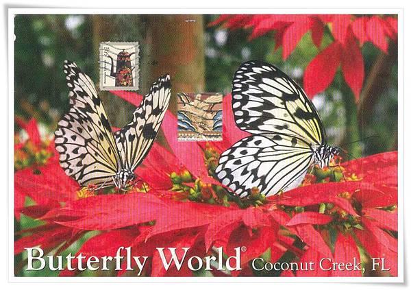 butterfly world1