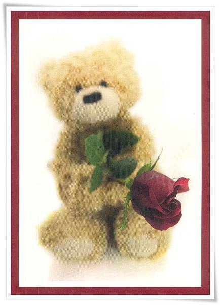 teddy with rose