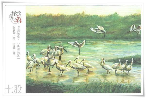 七股 黑面琵鷺