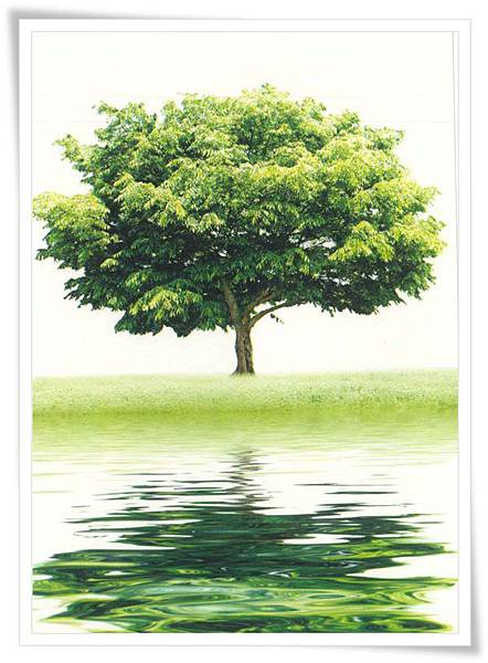 tree in NL